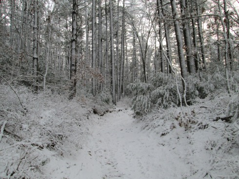 Part of the 1623 Green Harbor Trail on a snowy day